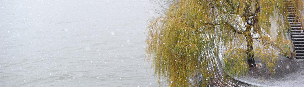 My Federal Disability